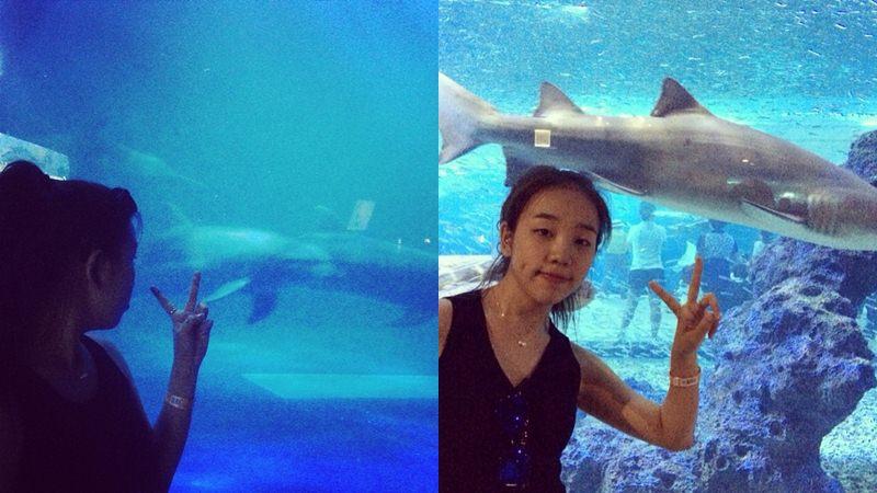 #「我妹妹」是個膽小鬼,她怕大鯊魚欸~(偶也是怕怕的...)
