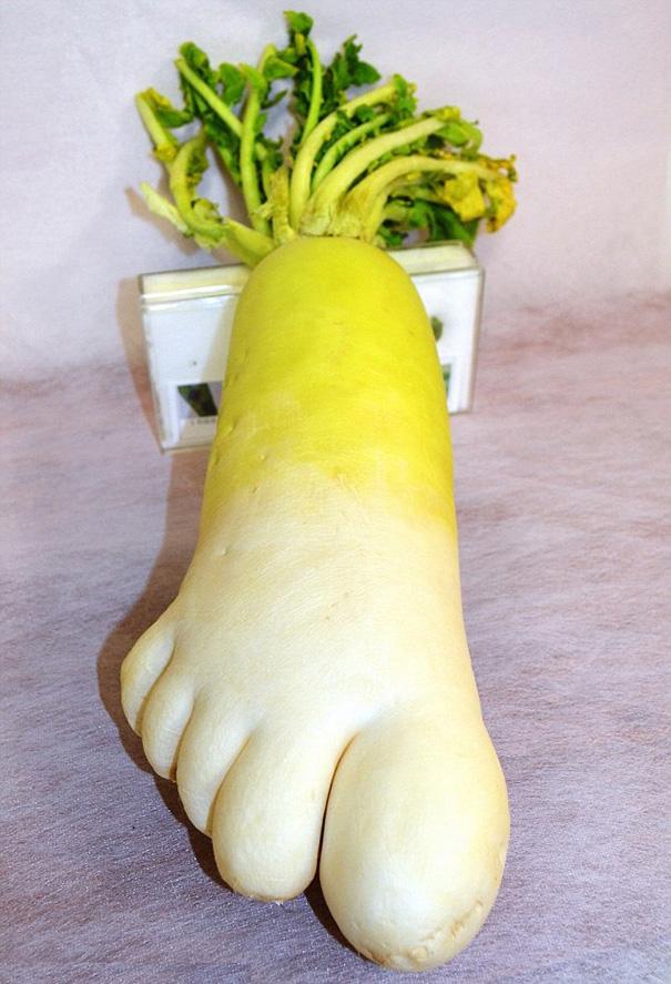 原來蘿蔔也有腳,而且跟人類的一樣(漲姿勢)