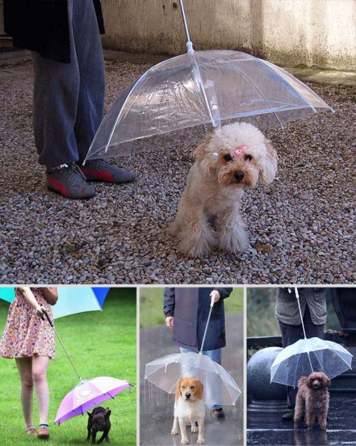 汪星人專用傘 直接抱起來走不是更方便嗎?