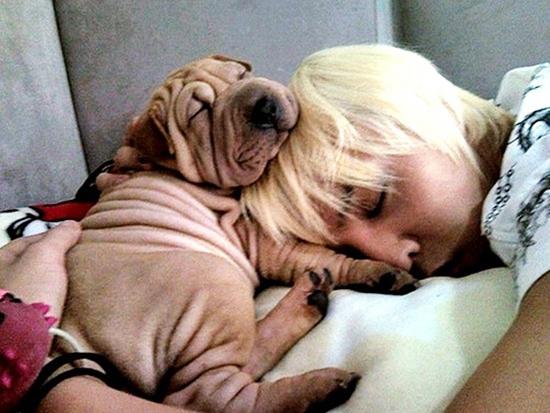 要說最有人氣的寵物狗當屬GD家的家號(가호)了,不要少看這只小狗,它可是世界上唯一一個走過MAMA典禮紅毯的狗哦!而且還和GD一起拍過廣告和MV呢!甚至有VIP說:「 在飯上BIGBANG之前,我從來都不知道我會羨慕一隻滿身褶子的狗」。XDD