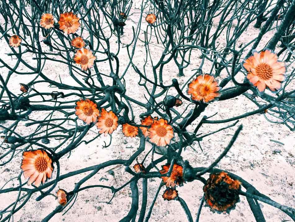 花卉類 一等獎 攝影師 - Amy Paterson