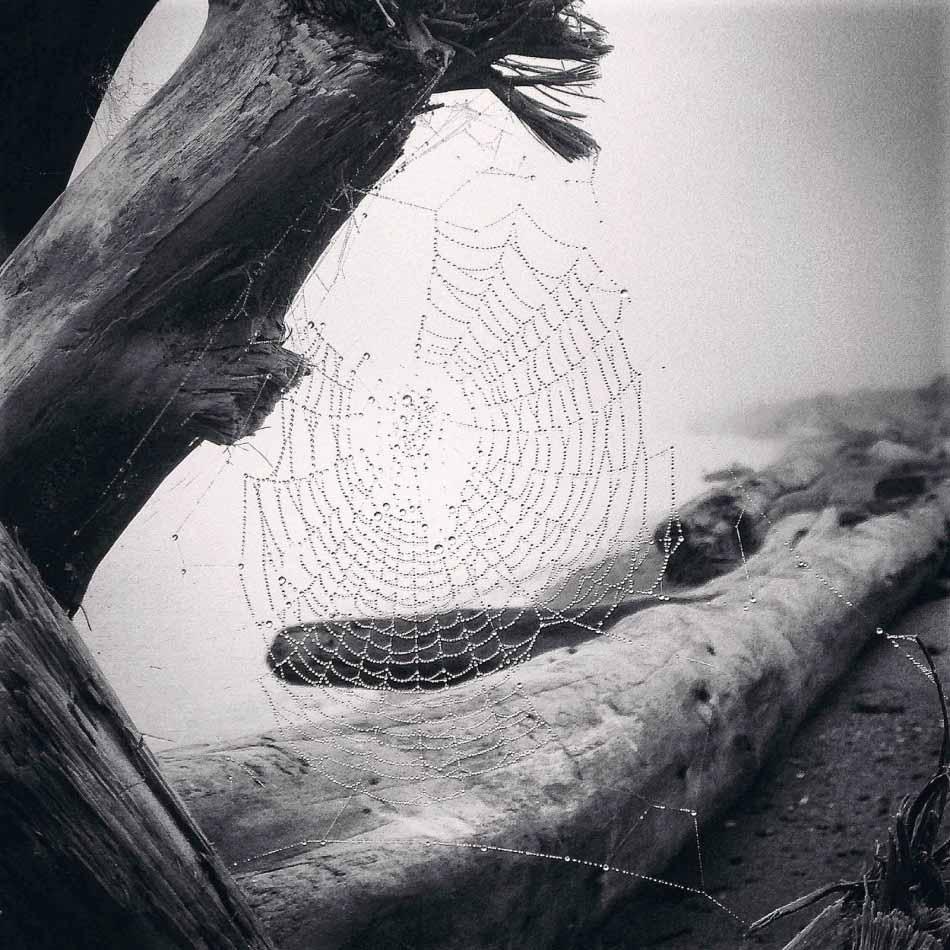 自然類 一等獎 攝影師 - Yvonne Naughton