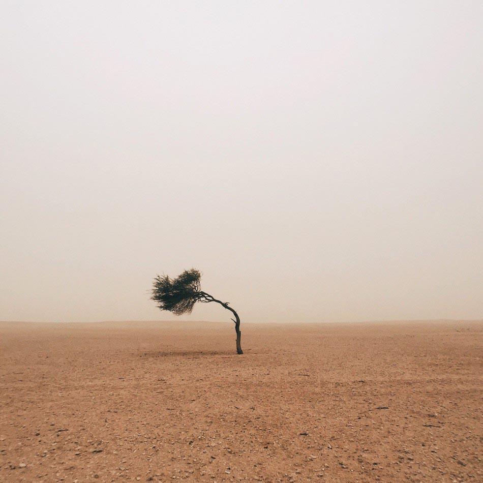 樹木類 一等獎 攝影師 - Ruairidh McGlynn