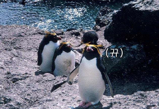 哈哈哈~這企鵝居然叫通心粉??????????