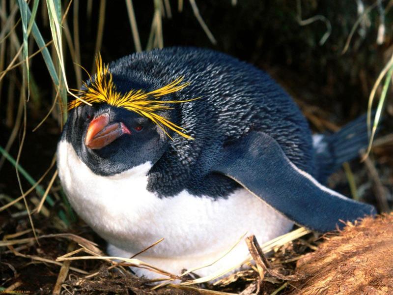 雖然偶不像其它企鵝兄弟姐妹們那樣,長得很可愛...但是