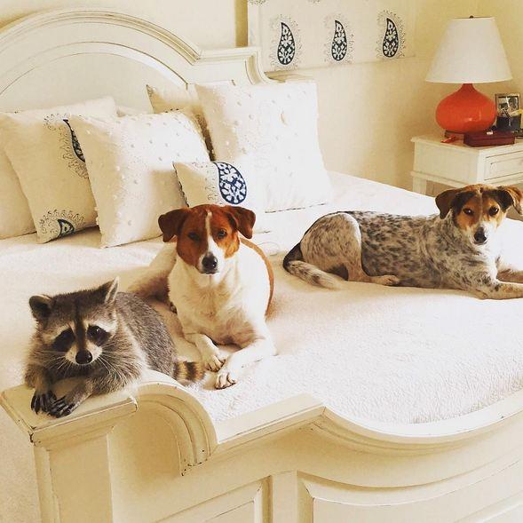 每天和狗狗朋友在一起玩,小南瓜偶爾都覺得自己也是狗狗的呢*≧▽≦* (狗姿很標準的欸~)