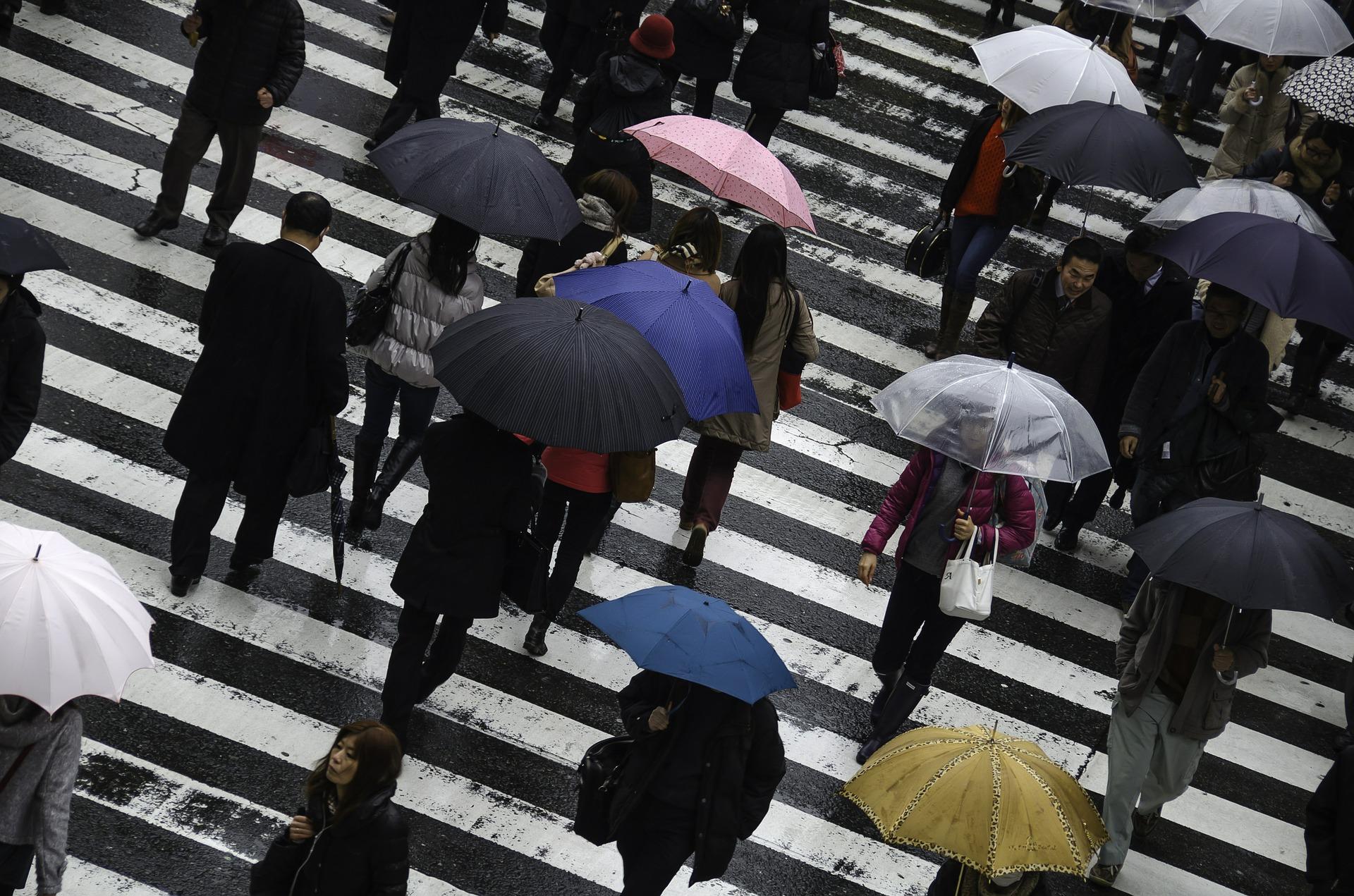特別從上往下的視角拍攝時 街導上彷彿因為雨水的澆灌開起了小花 也是個有詩意的鏡頭!