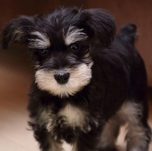 這隻狗狗生活在加拿大...主人十分愛它,還給它專門申請了一個IG帳號~♥