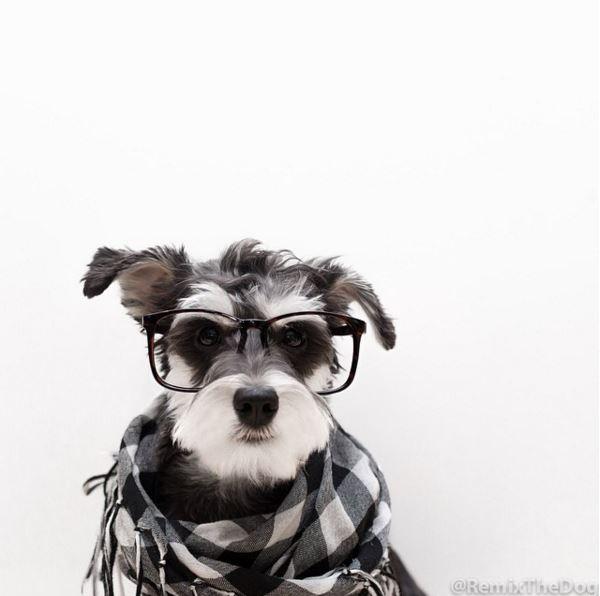狗狗的時尚感也噌噌噌地往上竄~