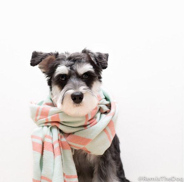 據說圍脖能增加暖男氣質#本狗狗也來試一試