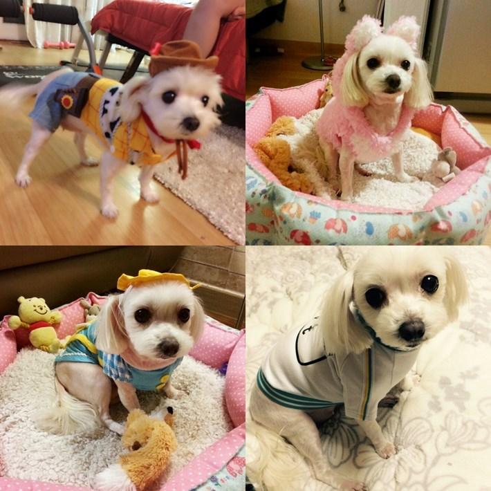 旼赫很常幫Hamo扮裝耶~而且小編意外發現有件衣服居然和上次SM篇俞利愛犬穿一樣的欸XD