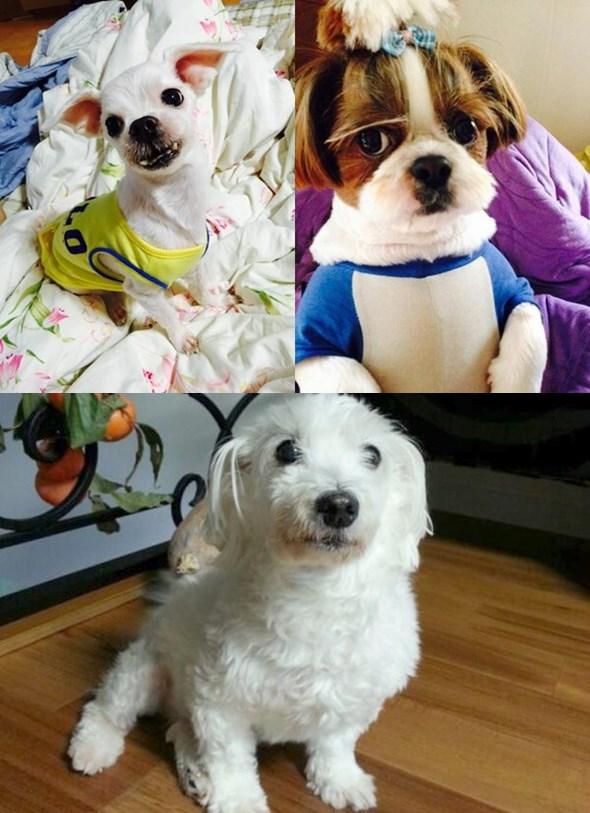 話說防彈少年團成員們也太喜歡狗狗了吧!!柾國、j-hope、Jin也都有愛犬XD太可愛了啦~