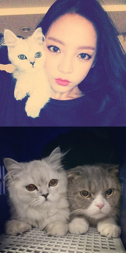 有兩隻喵星人pico和chacha的荷拉也經常曬寶貝貓咪的照片呦~真的好可愛!!