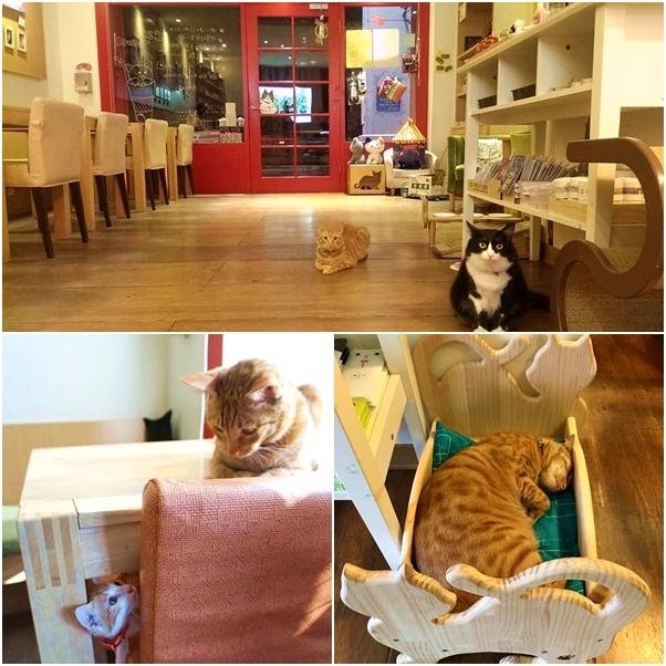 ➤貓‧旅行咖啡輕食館 ➤台中市西區林森路26-6號 飽兒自己非常想去的一家餐廳 ! 整間店都充滿著少女的元素
