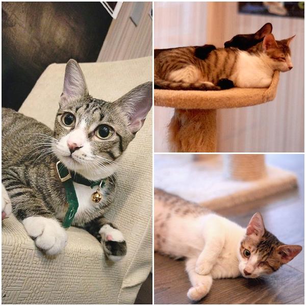 ➤瞎聊。 貓咖啡 ➤台南市東區東安路169號 位在台南的瞎聊貓咖啡,店內有提供認養貓咪的服務喔