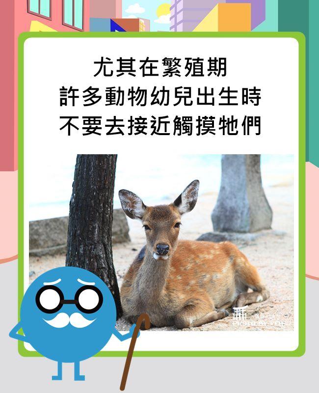 鹿們的繁殖期在夏天,也就是現在這期間喔~
