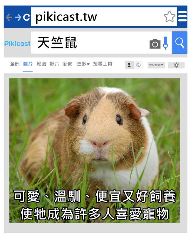 其實天竺鼠也有送養領養的喔!