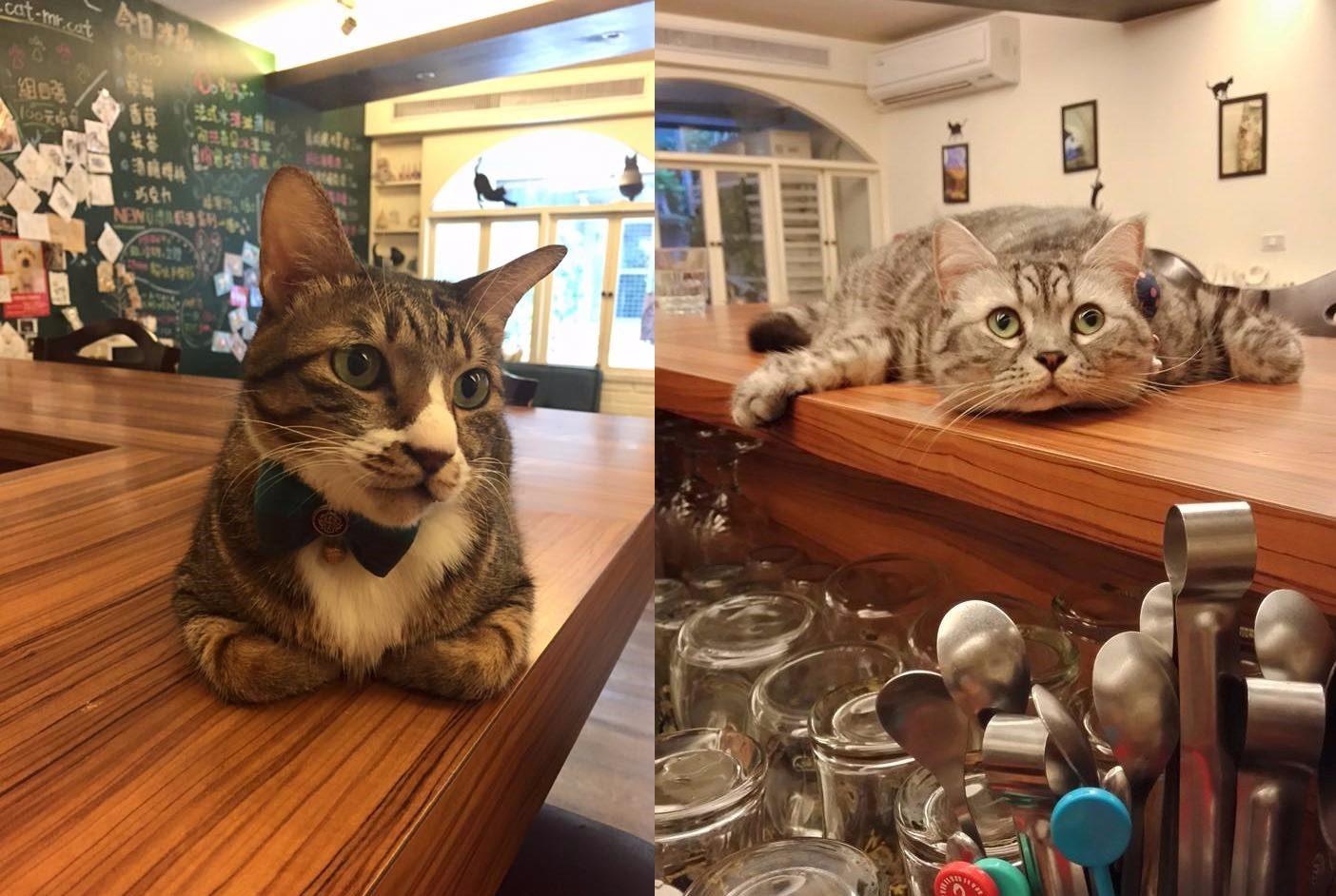 ➤貓咪先生的朋友 ➤台北市大安區大安路一段83巷7號 一進門就會看到可愛的貓咪在迎接妳